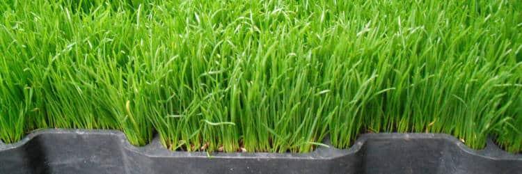 Verharding gras